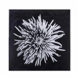 Black & White Flower Photograph - A