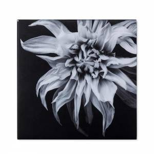 Black & White Flower Photograph - F